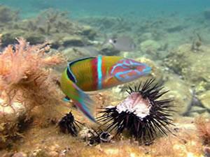 duiken-op-Kreta